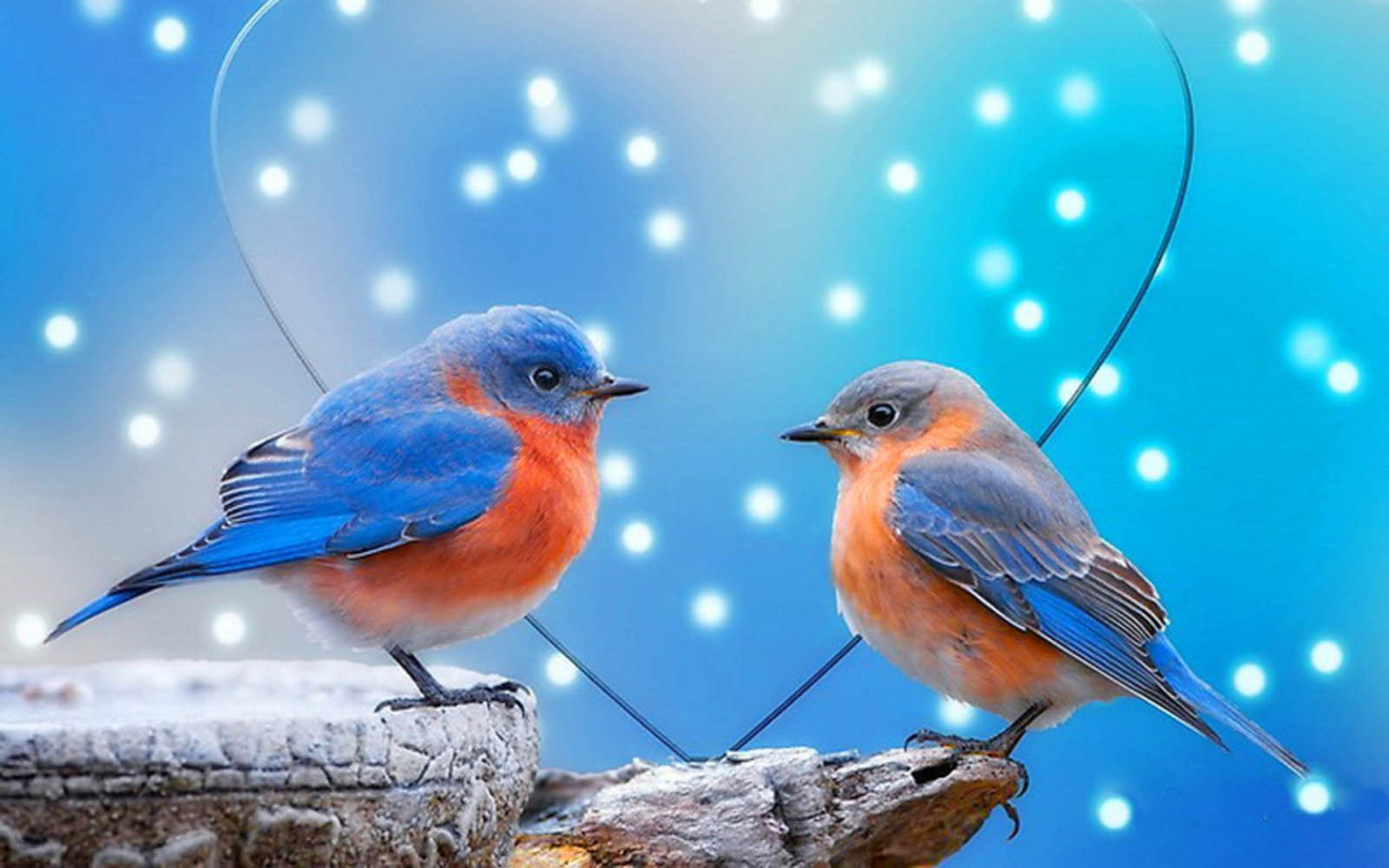 Love Birds WallpapersImage for pc wallpaper 1600x1000
