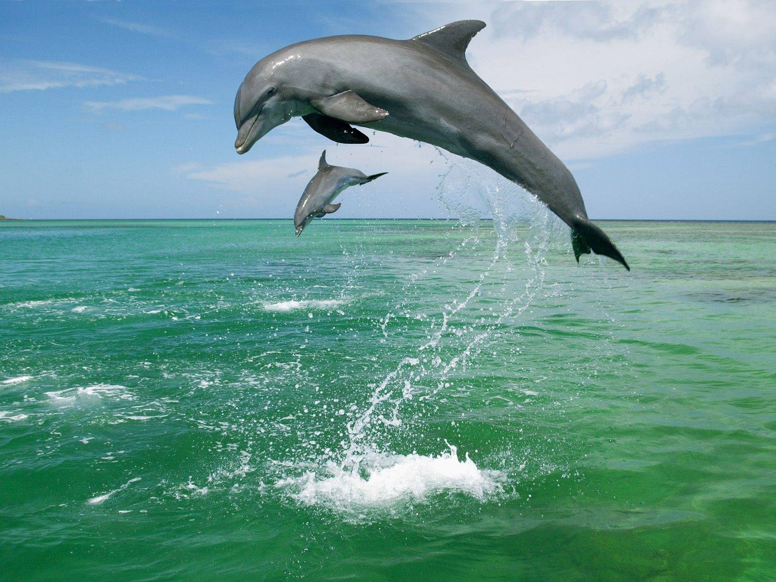 HD Dolphin Wallpapers   HD Animal Wallpapers 1600x1200