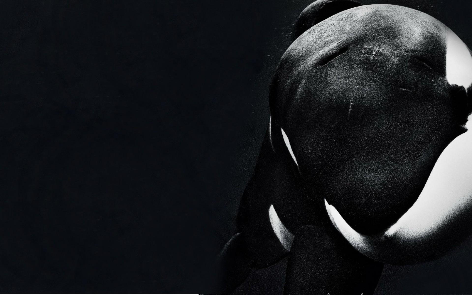 Please watch Blackfish Tilikum   Imgur 1920x1200