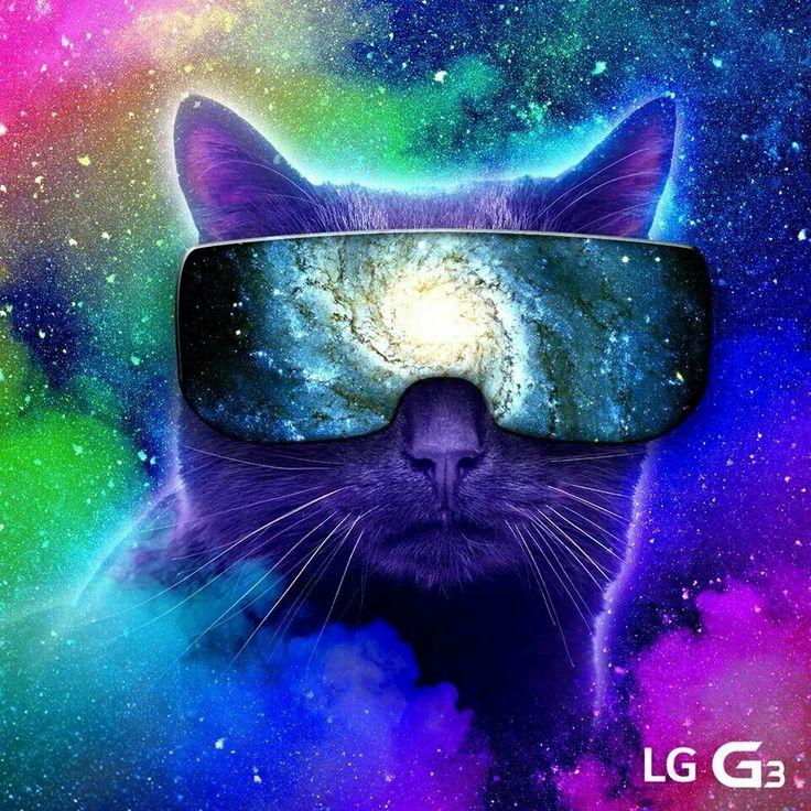 48 space cat wallpaper on wallpapersafari - Space kitty wallpaper ...