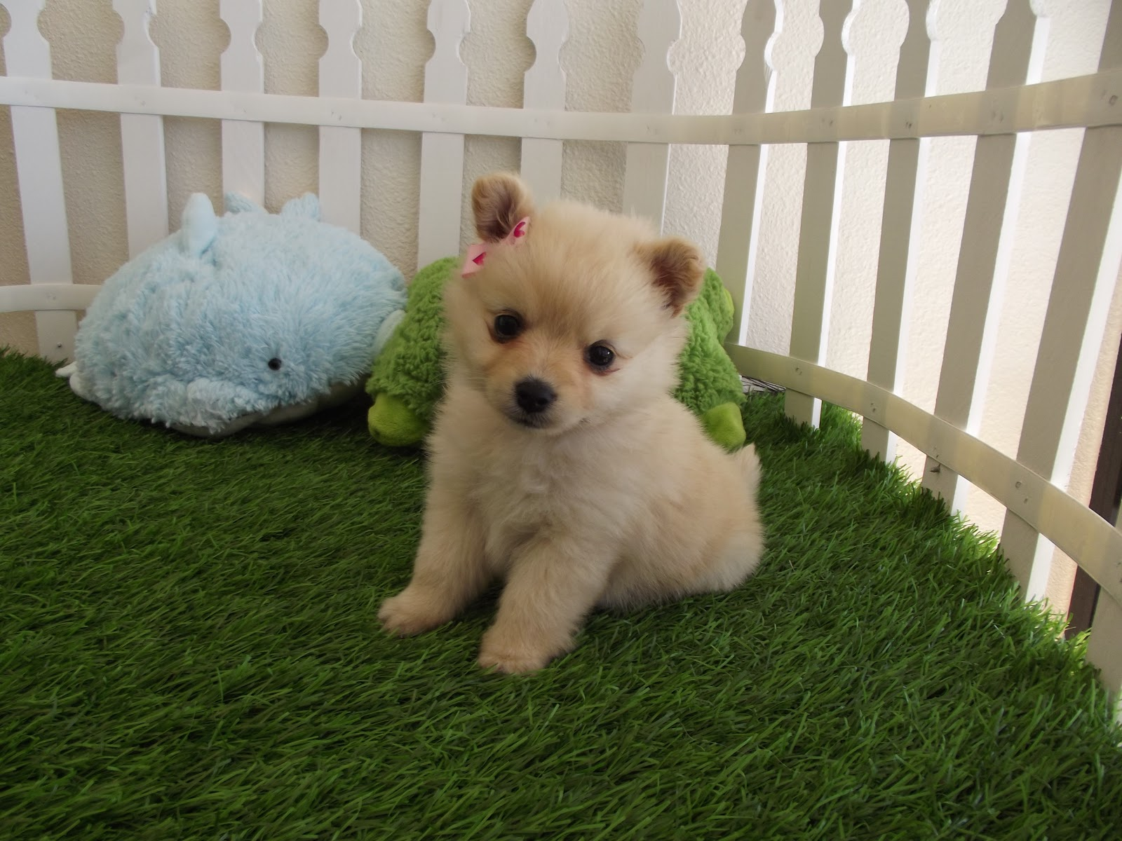 Cute Puppies HD Wallpapers Cute Puppies HD Wallpapers Check out the 1600x1200