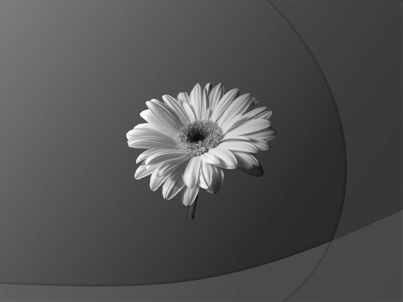 Widescreen desktop wallpaper dark flower wallpapersafari - Flower wallpaper black ...
