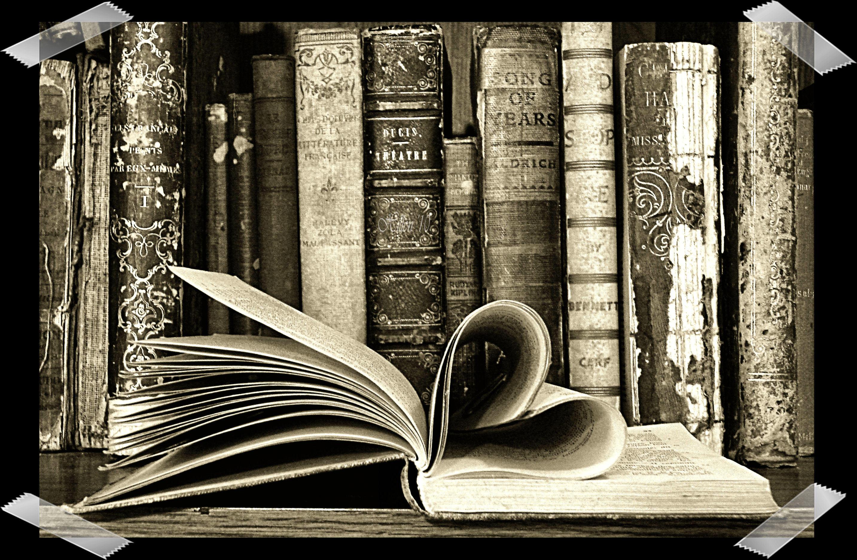 book nerd wallpaper wallpapersafari