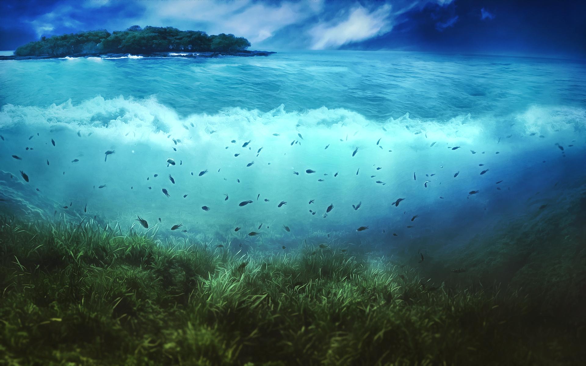 underwater painting plants - HD1920×1200