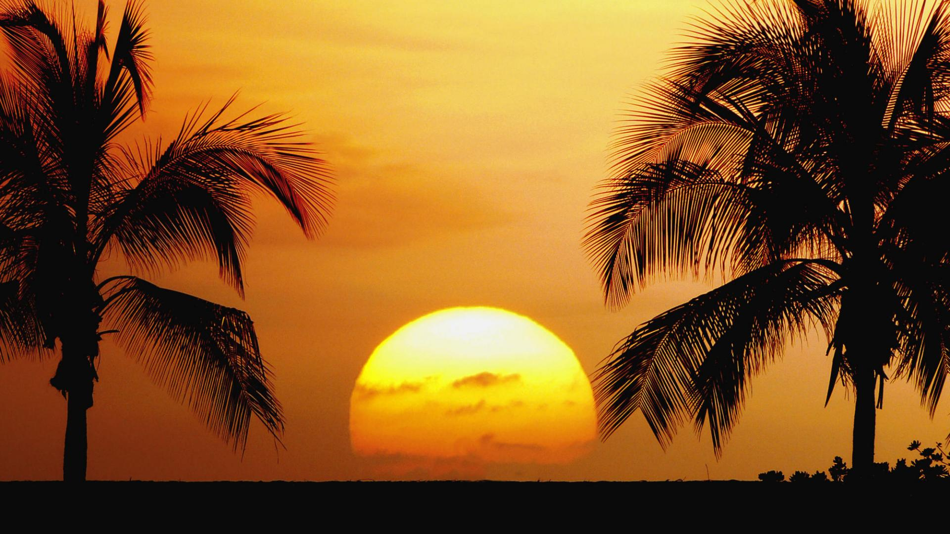 Tropical Beaches Beautiful Palm Trees Sunrise Sunset Landscape 278064 1920x1080
