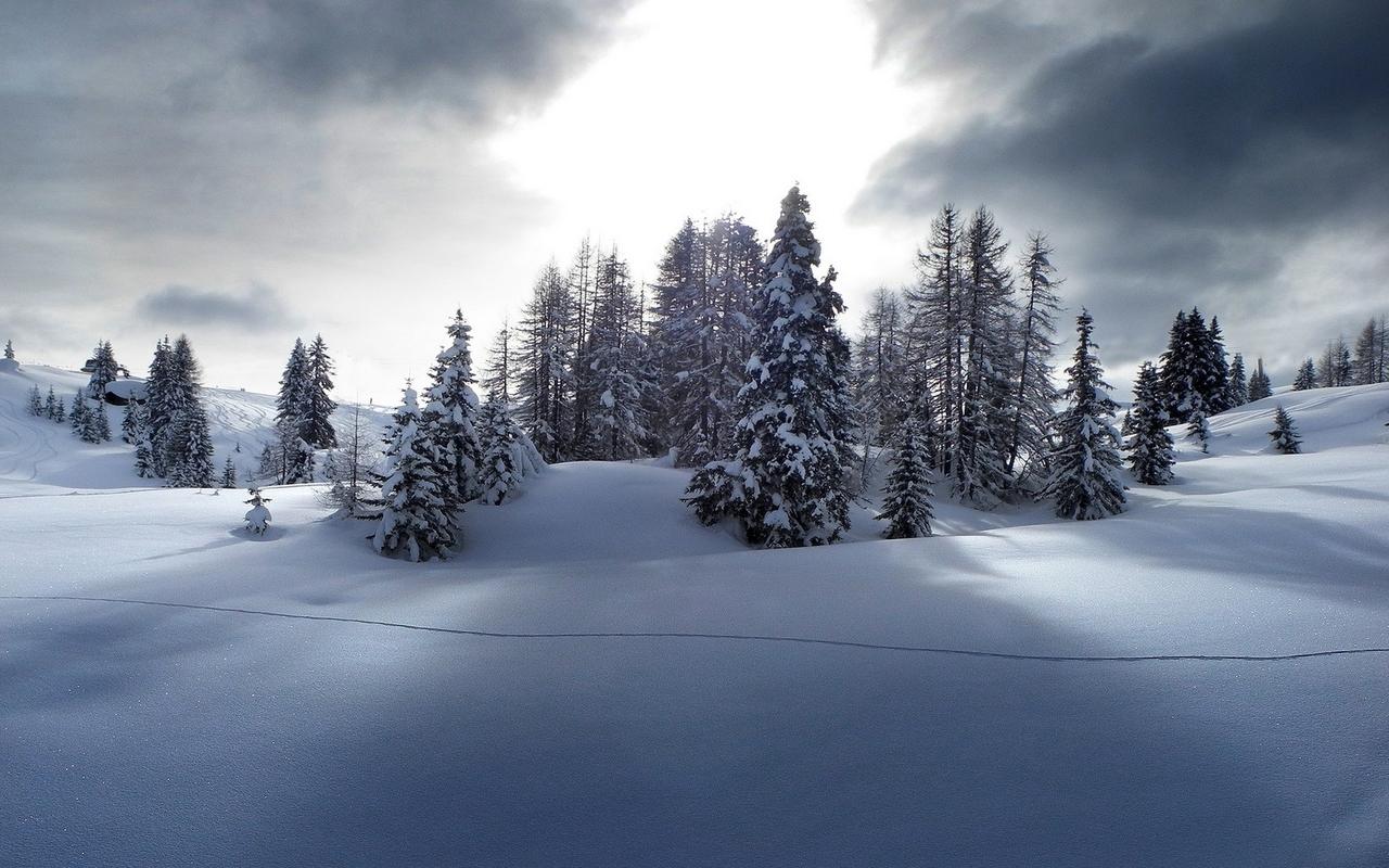 Download Snowy pine trees wallpaper 1280x800