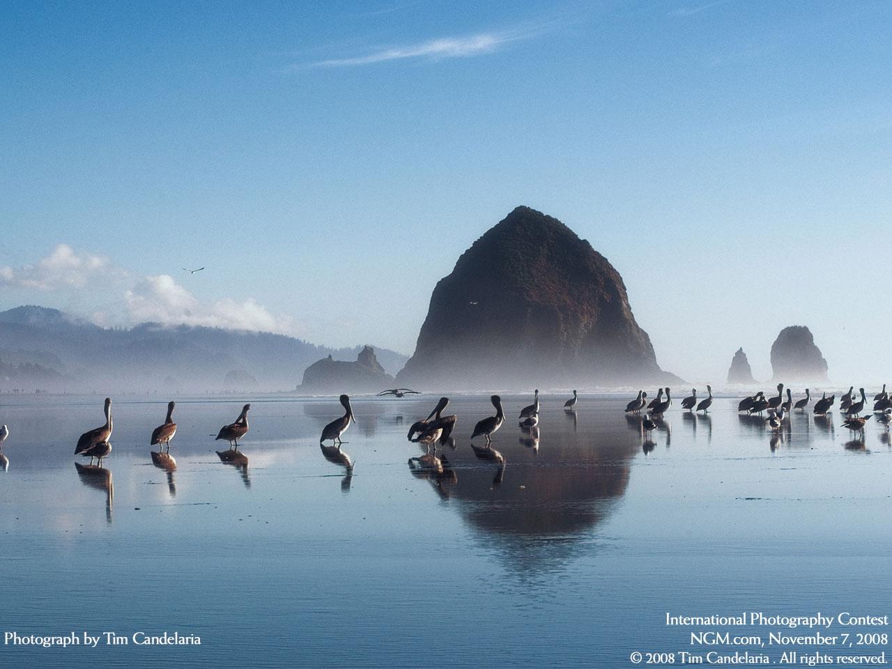 70 Wallpapers HD de National Geographic   Taringa 1280x960
