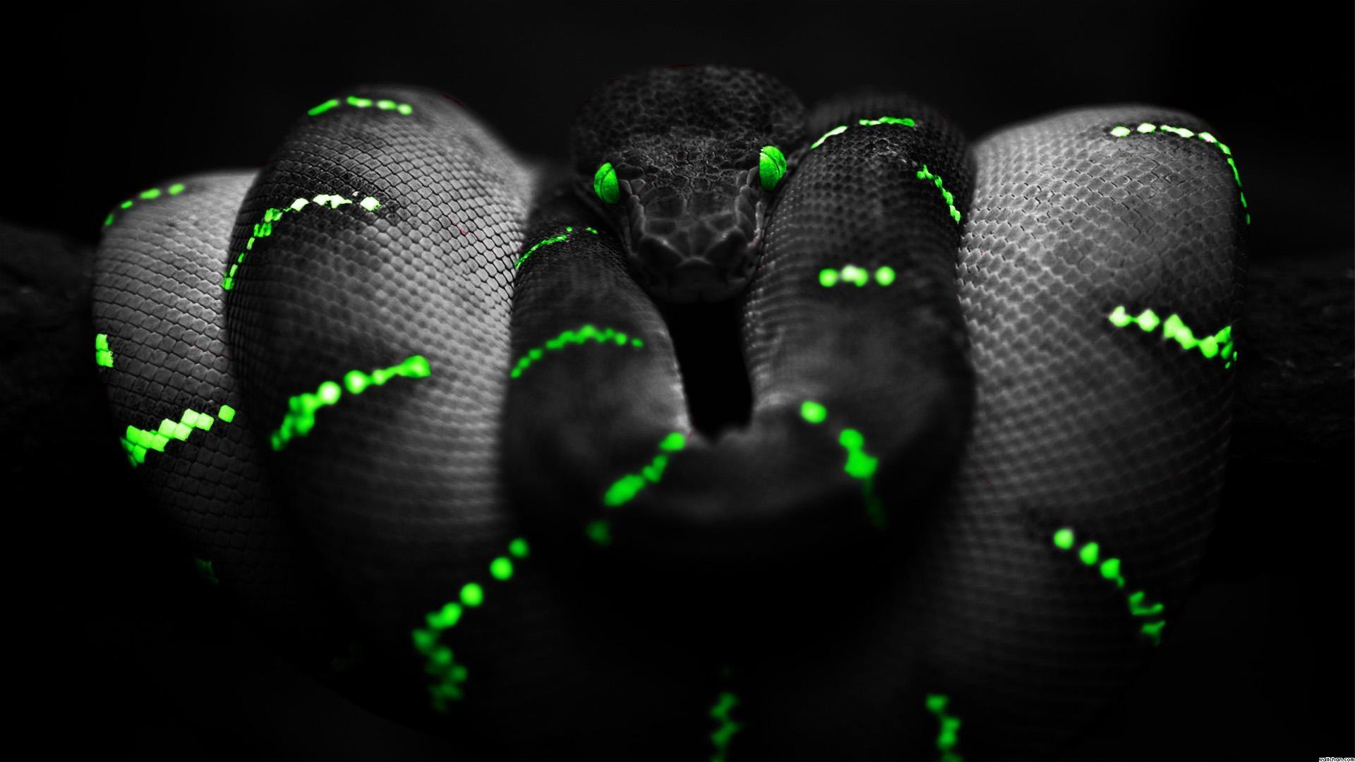 Green and black wallpapers wallpapersafari - Green snake hd wallpaper ...