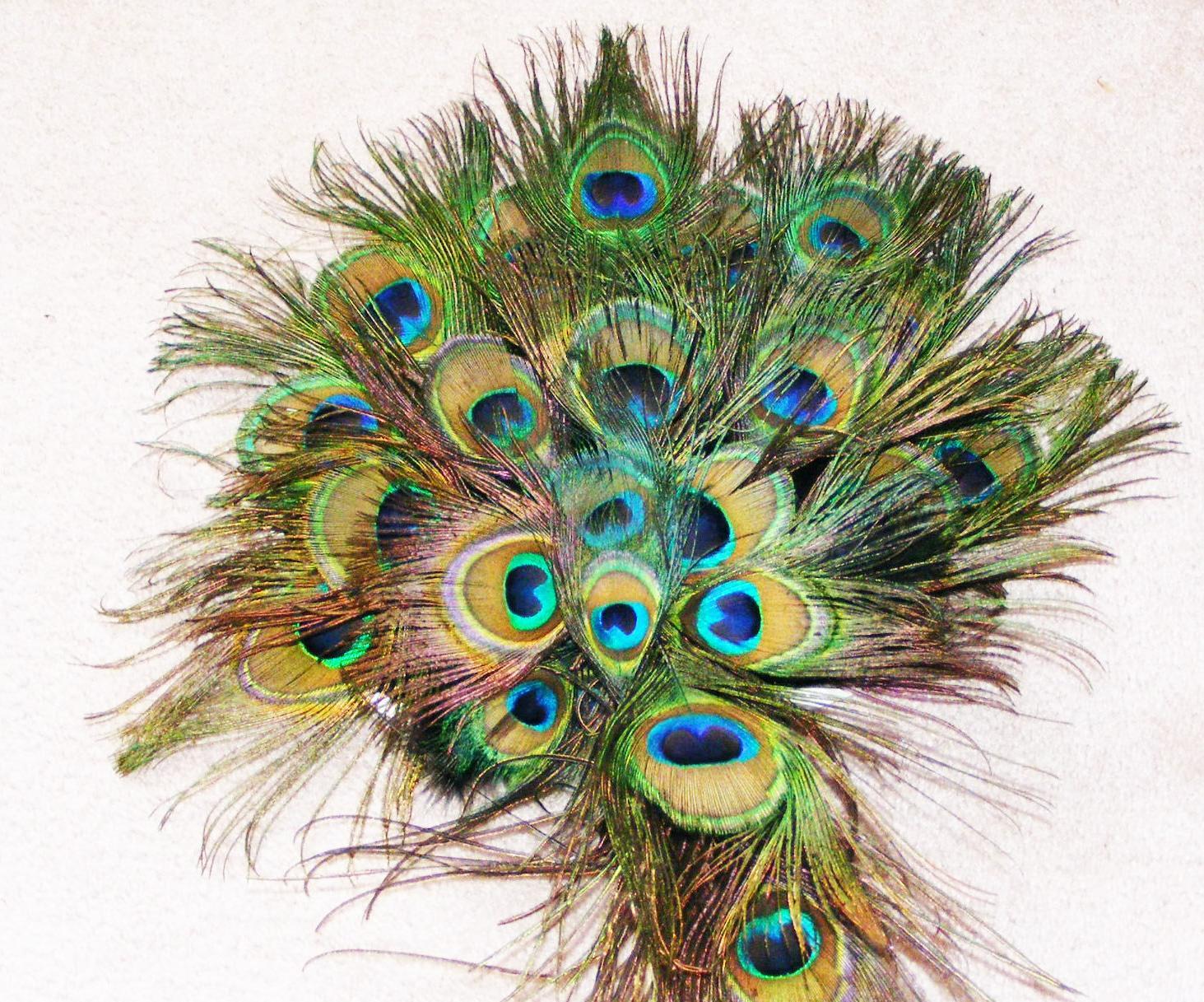 Peacock Feathers Wallpaper Wallpapersafari