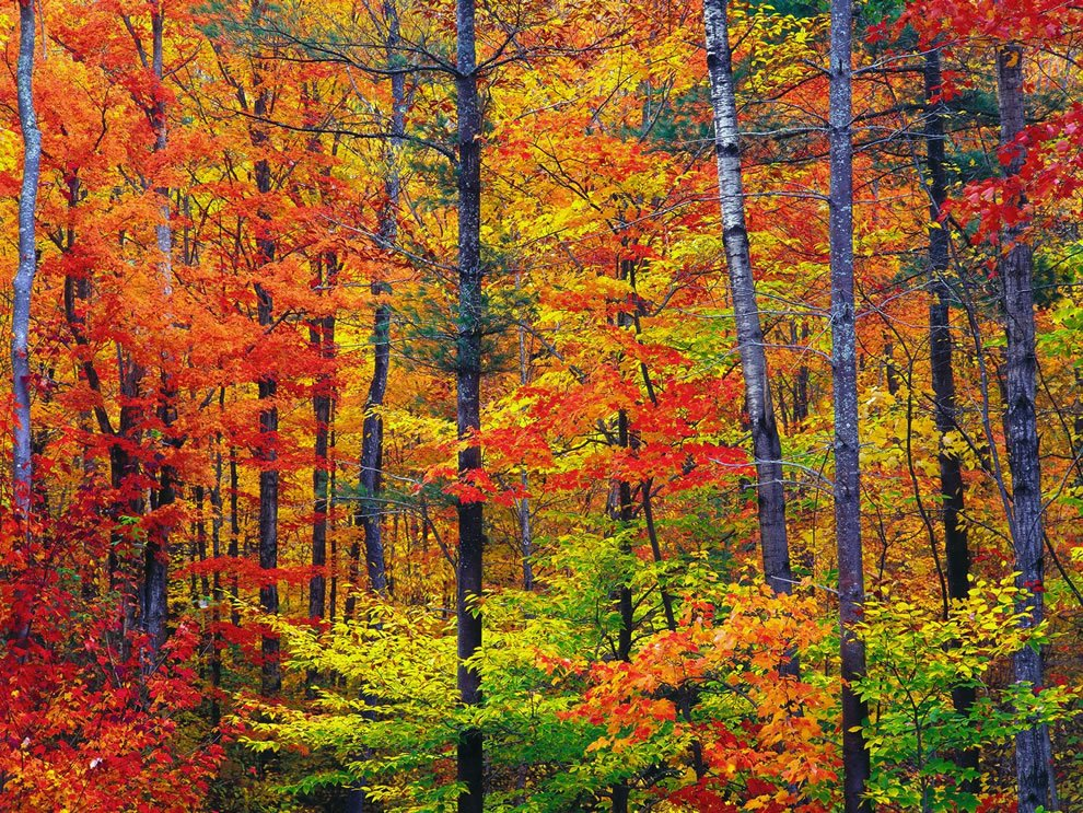 America the Beautiful in Autumn Peak Fall Foliage Dates for 48 States 990x743