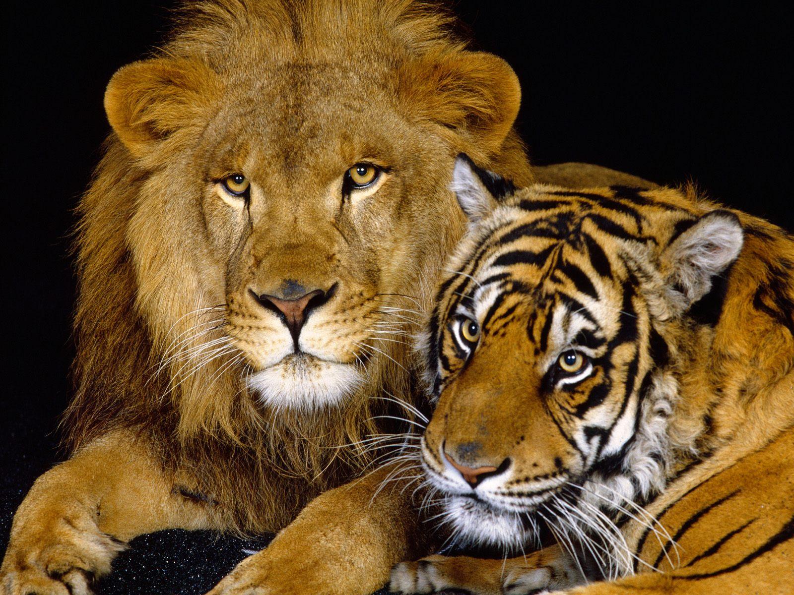 Animals love photos Animals wallpapers 1600x1200