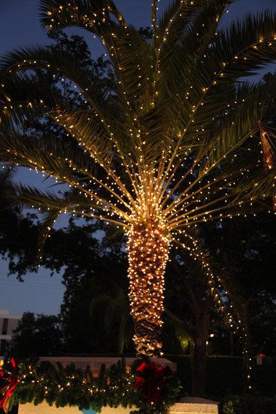 palm tree christmas lights wallpaper - photo #3