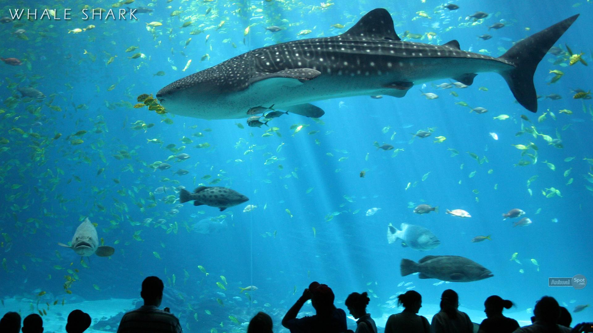 Hammerhead Sharks Desktop Wallpaper Hd