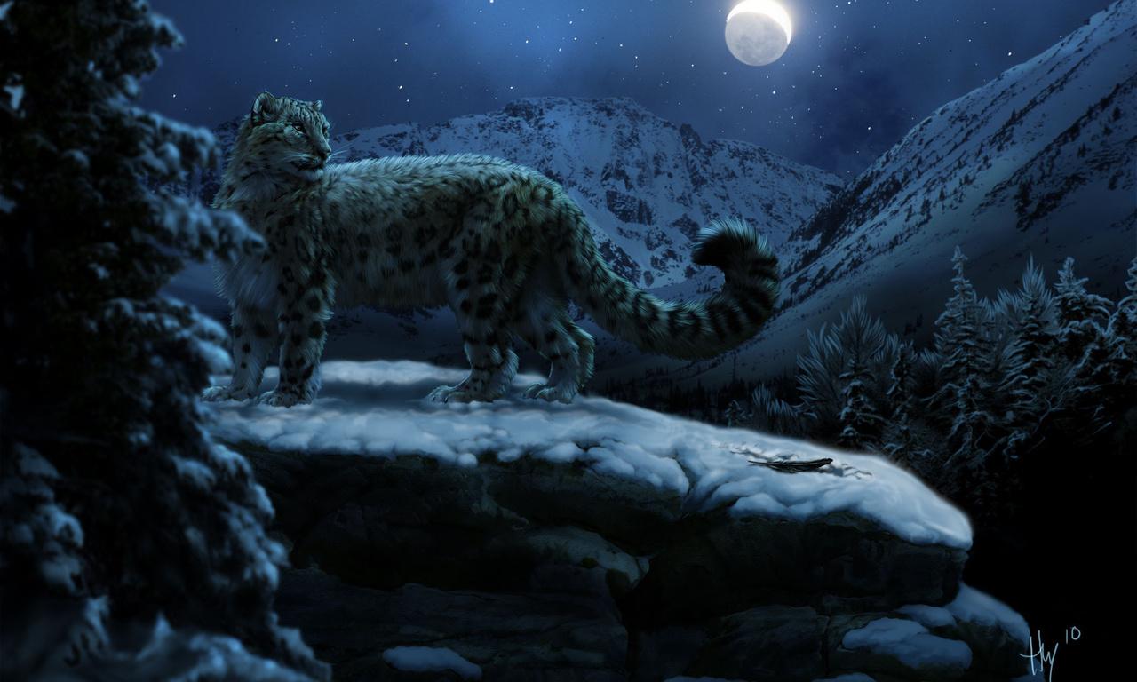 HD Wallpapers luipaard sneeuw nacht kitty kitty Meow Meow  foto 1280x768
