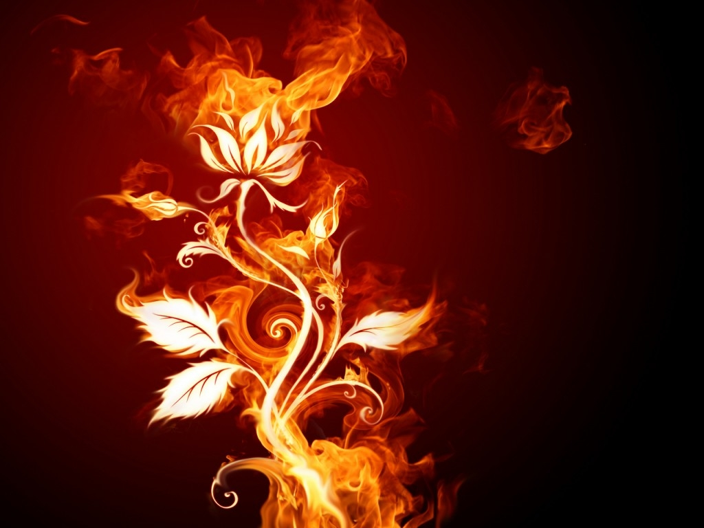 Fire Rose Wallpapers on my Desktop Pinterest 1024x768