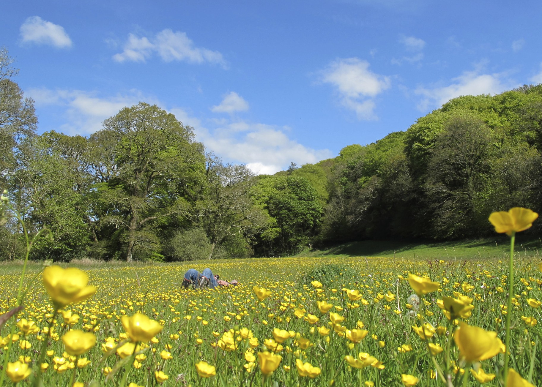 English Countryside 1824x1303