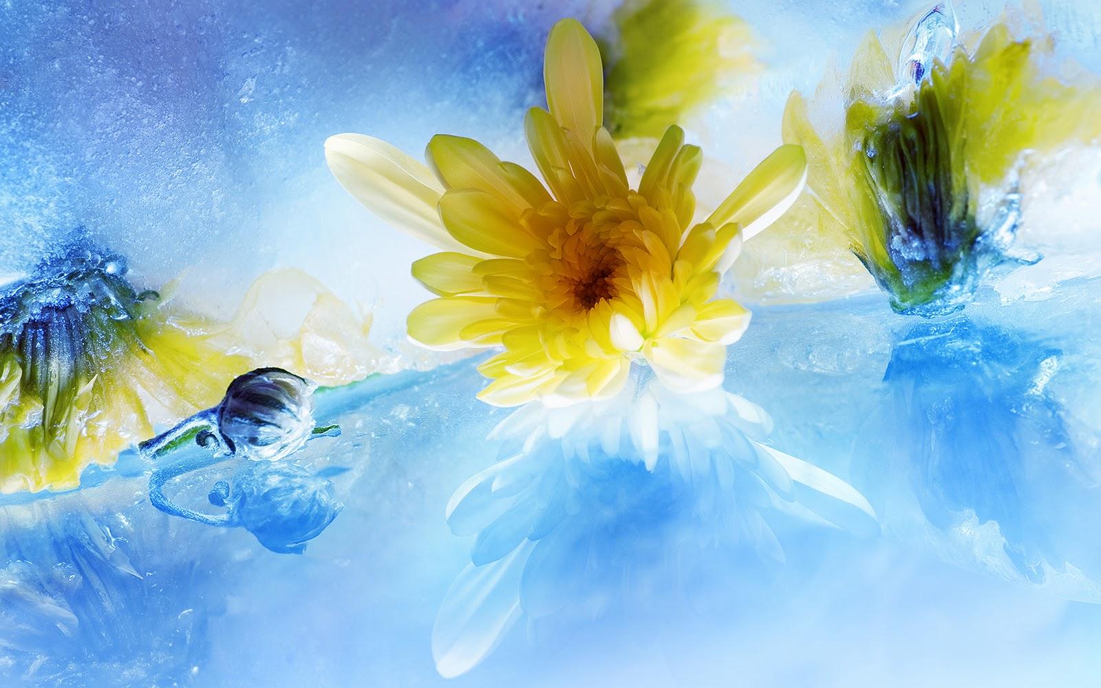 Pics photos hd wallpapers epic desktop s - Flowers Water Ice Amazing Hd Wallpapers Epic Desktop Backgrounds