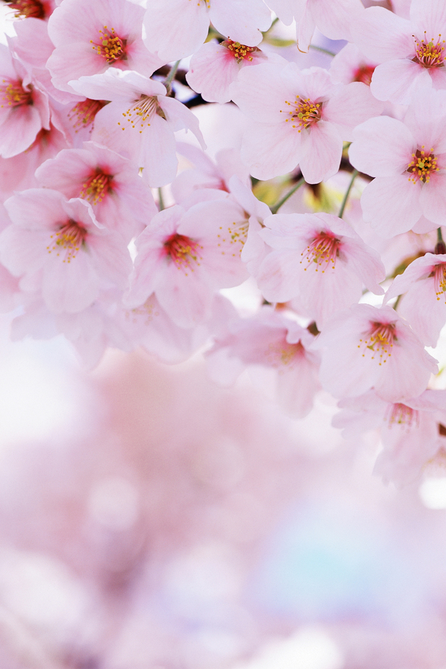 640x960px Spring Wallpaper For Iphone Wallpapersafari
