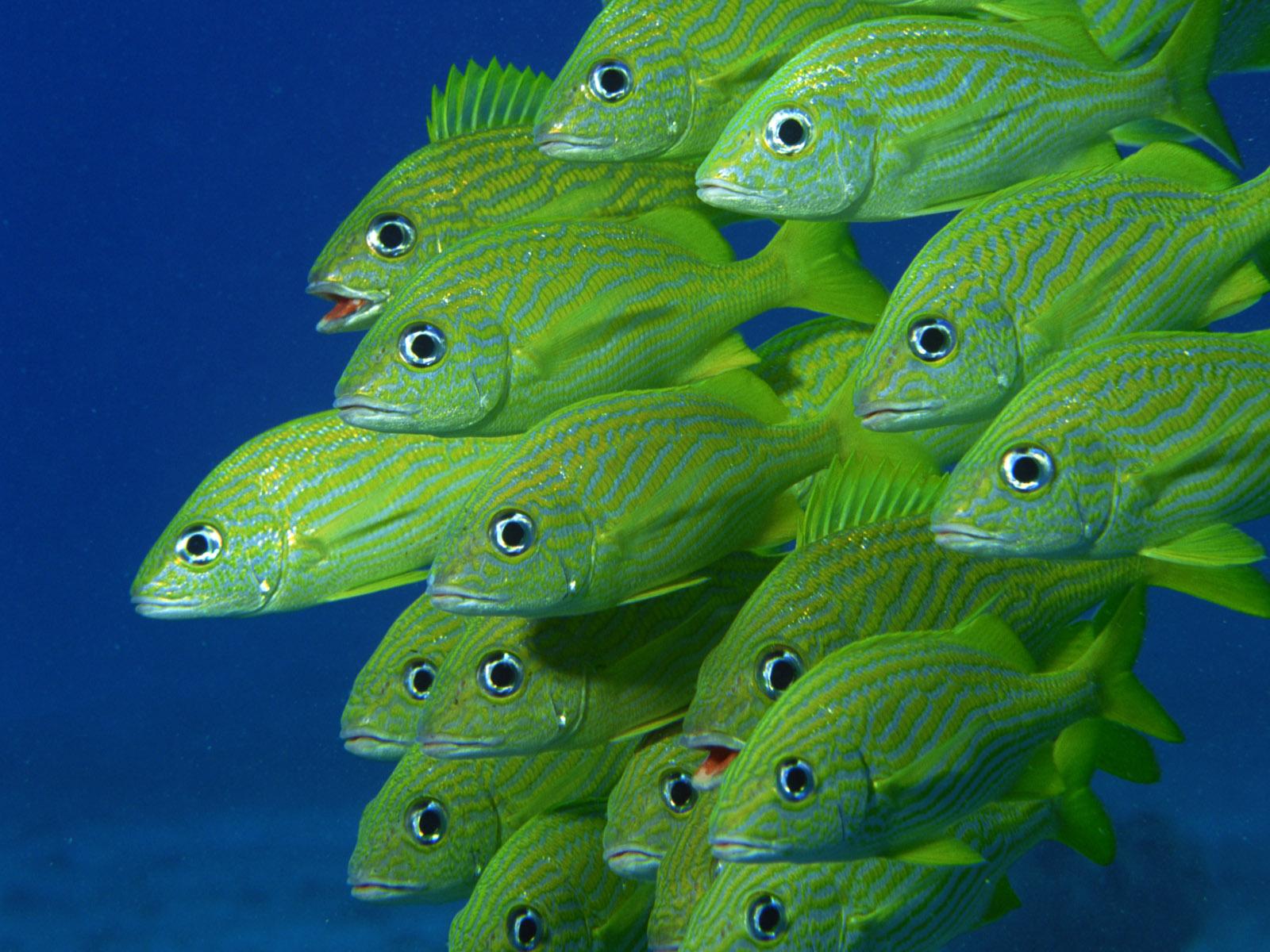 Download Fish Wallpapers wallpaper green fish wallpaper 1600x1200