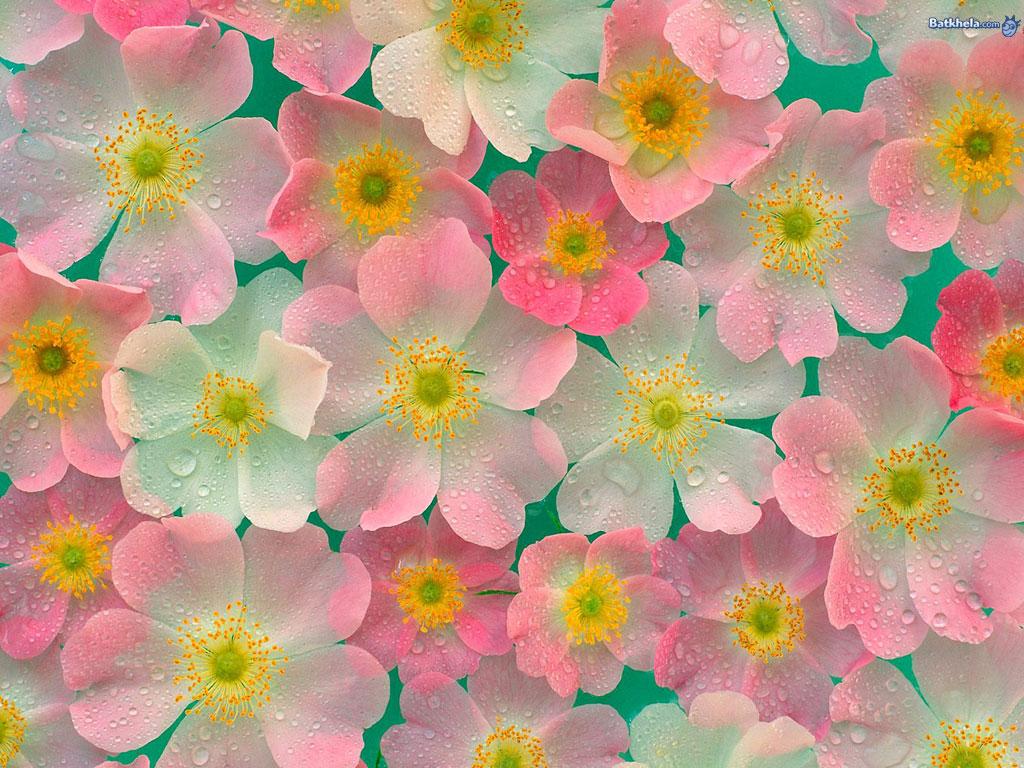 Pretty flower backgrounds wallpapersafari flowers images pretty ness hd wallpaper and background 1024x768 mightylinksfo
