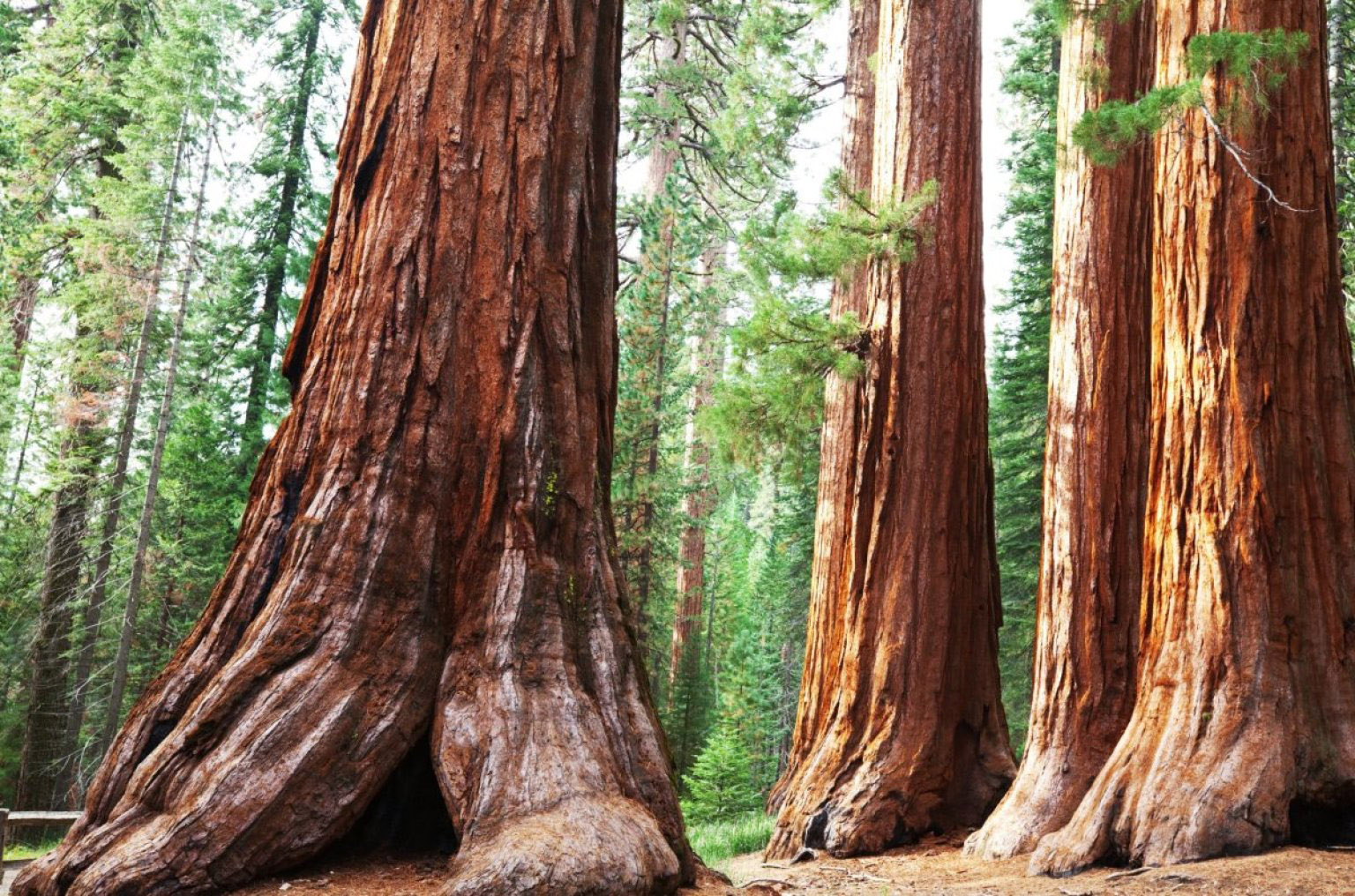 Sequoia National Forest Park Wallpapers HD 1536x1016