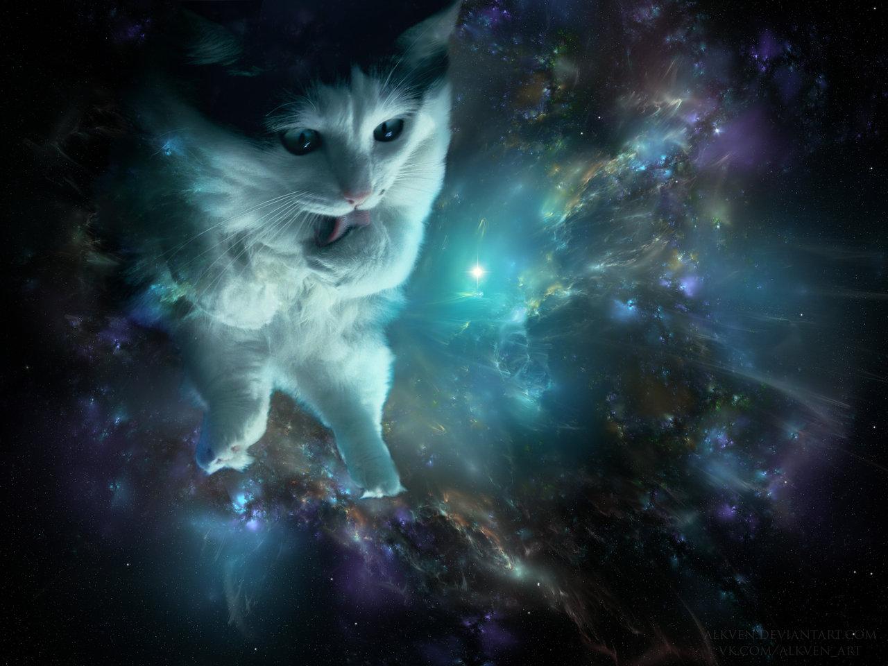 42 cat in space wallpaper on wallpapersafari - Space kitty wallpaper ...