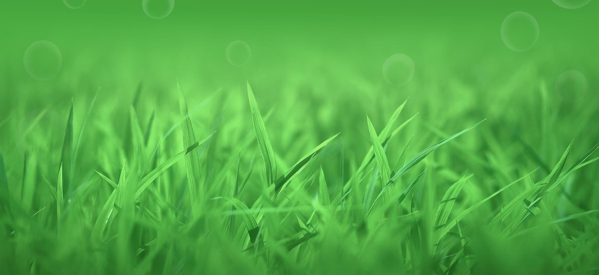Grass Field Spring Lawn Background Meadow Summer Growth 1200x552