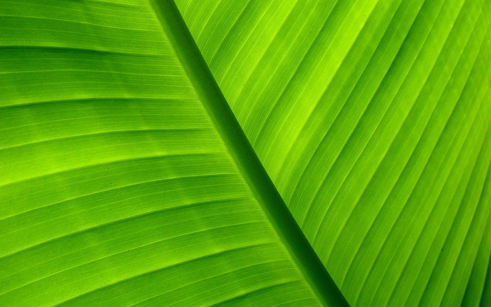 Palm leaf wallpaper 6285 1920x1200