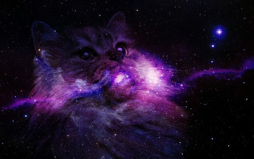 Galaxy Cat Wallpaper - WallpaperSafari