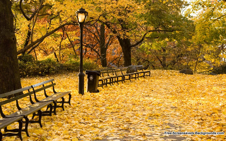 Central Park New York City Autumn 1440x900