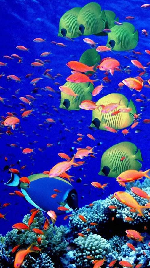 Ocean Live Wallpaper   Google Playde Android Uygulamalar 506x900