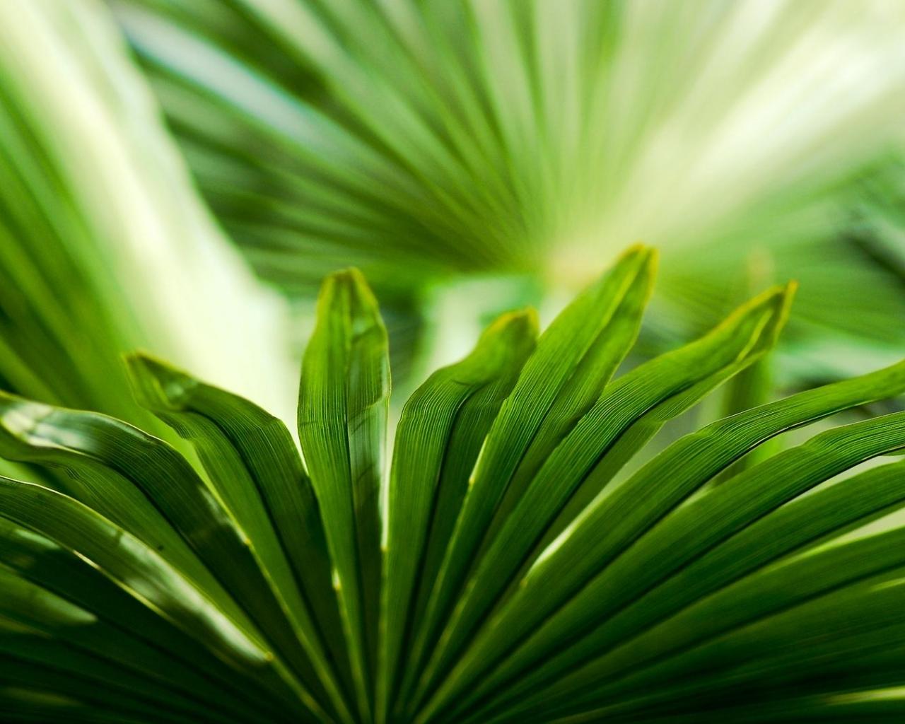 Download Palm leaves macro wallpaper in Flowers   plants wallpapers 1280x1024