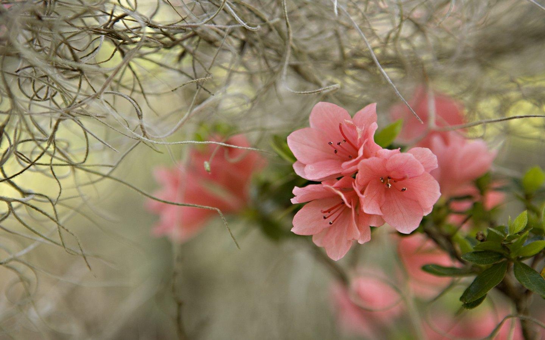 beautiful spring scenery wallpaper 1440x900
