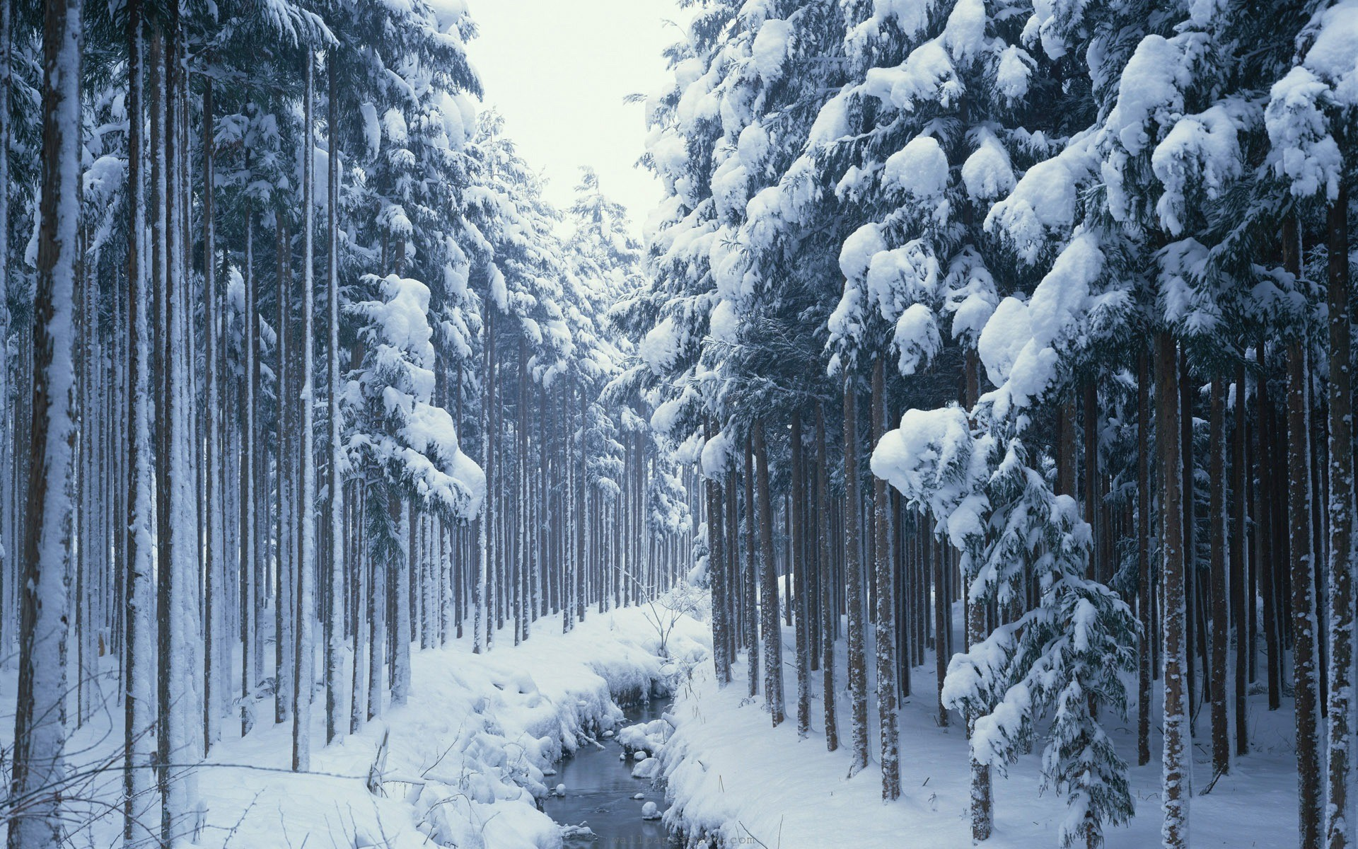 landscape winter wallpaper river forest widescreen Glisse en 1920x1200