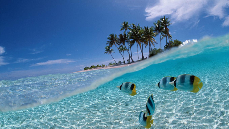 free tropical fish wallpaper wallpapersafari