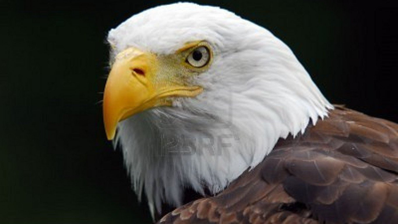 hd american eagle wallpapers hd american eagle with flag background 1366x768