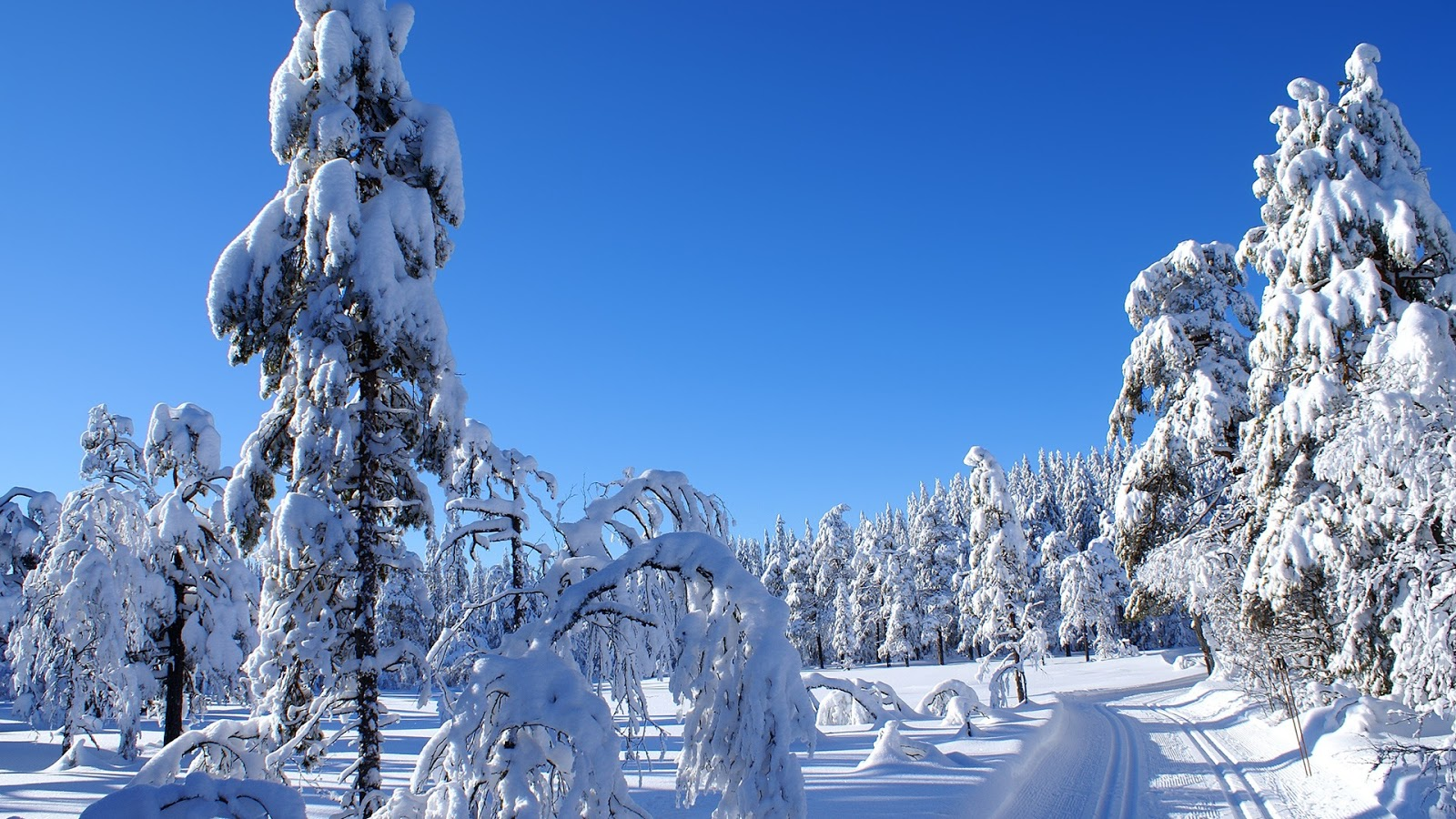 beautiful winter scenery winter wallpaper winter snowfall beautiful 1600x900