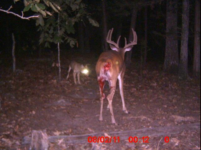 Image Result For Deer Hunting Backgrounds Hd