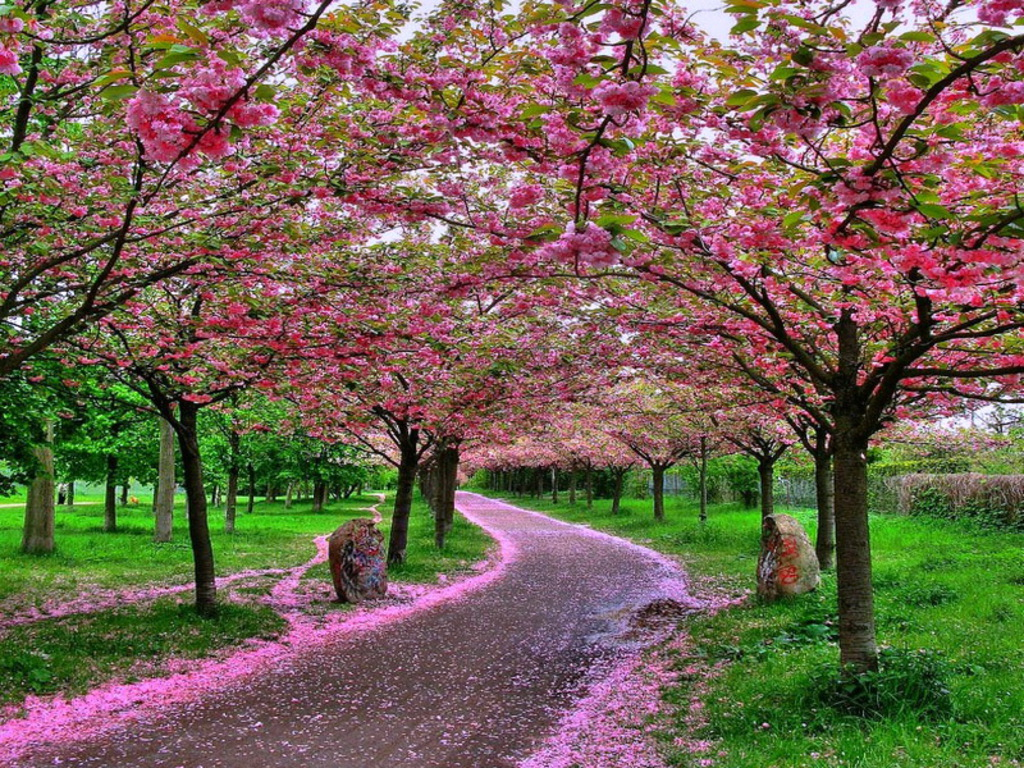 ... Nature Wallpapers: Beautiful pictures | Nice Wallpapers | Nature