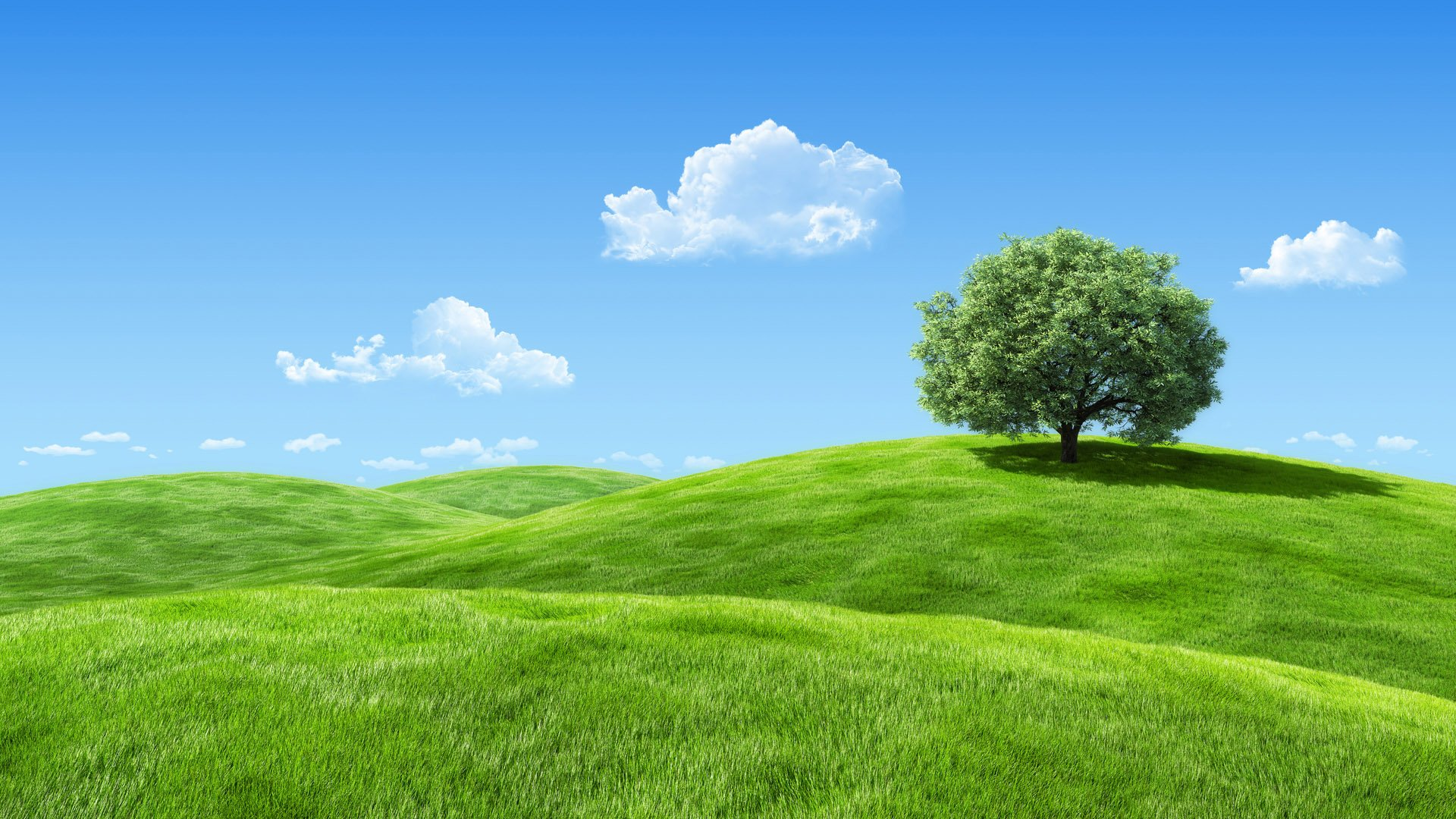Green Meadow Wallpapers  WallpaperSafari