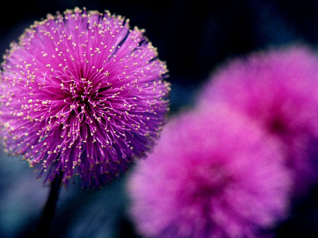 Purple Fuzzy wallpaper Blumen 1024x768