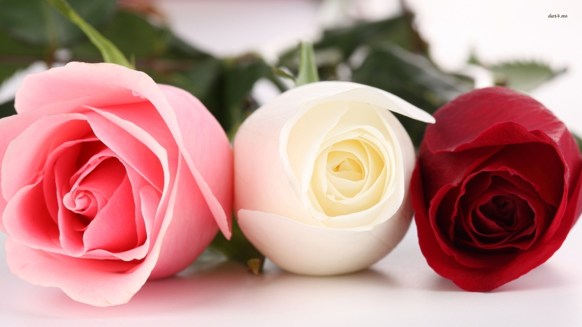 13866 Pink White And Red Roses 1920x1080 Flower