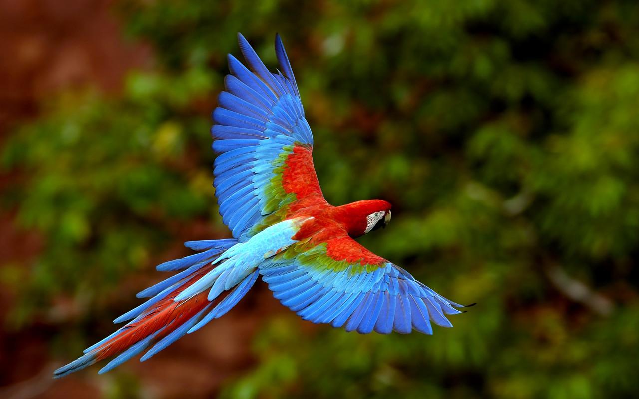 pictures top ten beautiful birds top 10 parrot wallpaper 1280x800