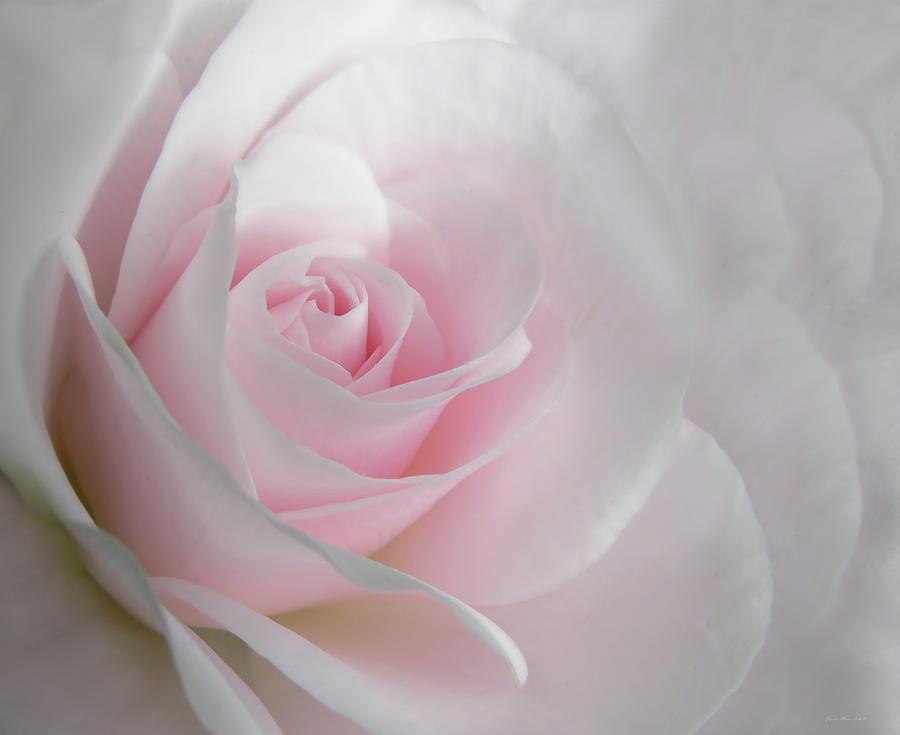 Light Pink Rose Flowers Wallpaper Flowers Healthy