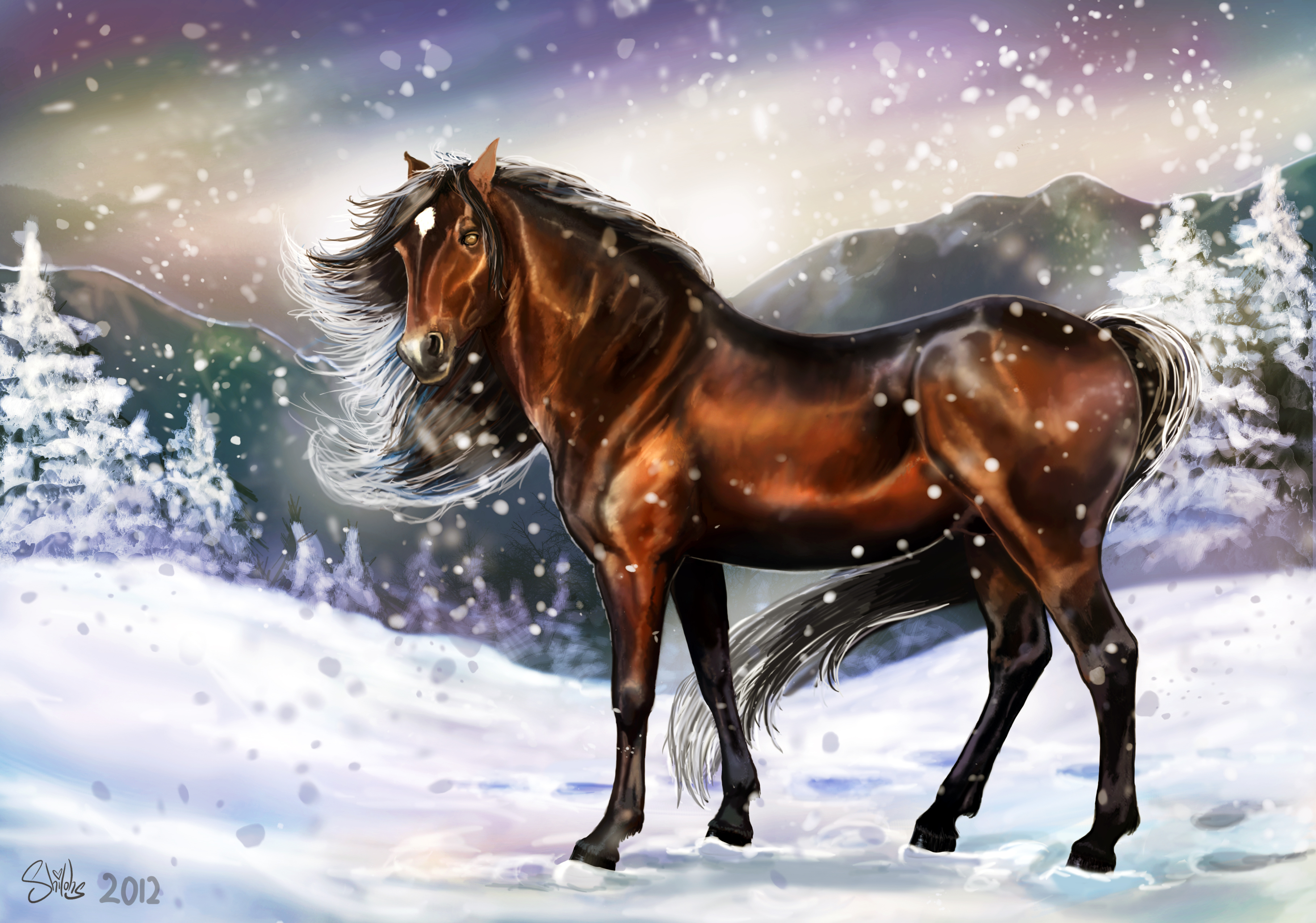 horse mane animals eyes winter cold snow footprints wallpapers 3634x2550