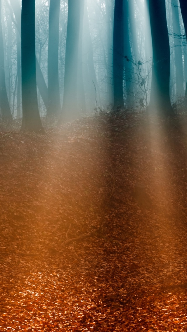 Autumn Forest 5 iPhone 5s Wallpaper Download iPhone Wallpapers iPad 640x1136