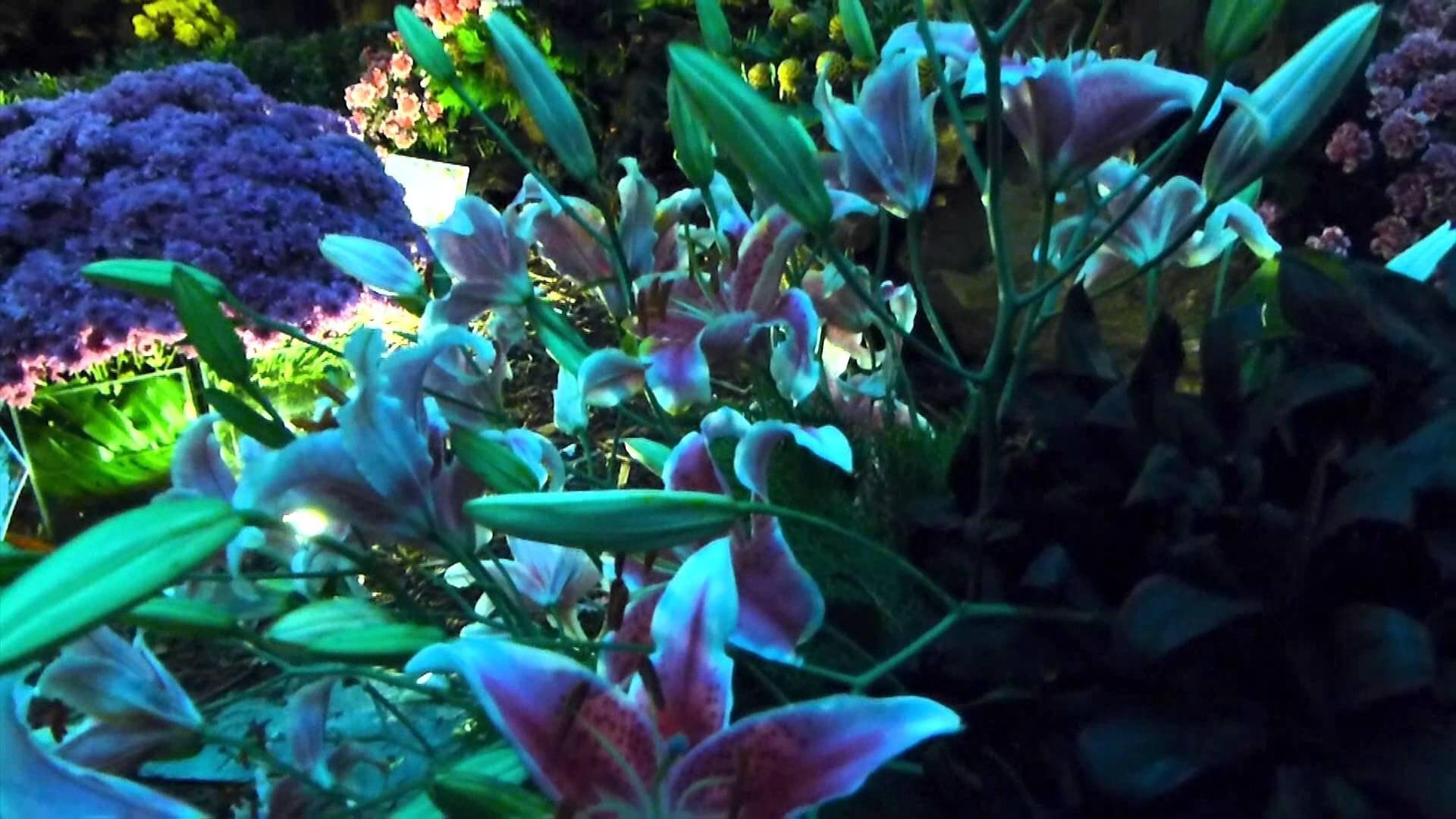 Floresplantamother Nature High Definition Nature Wallpaper Full 1920x1080