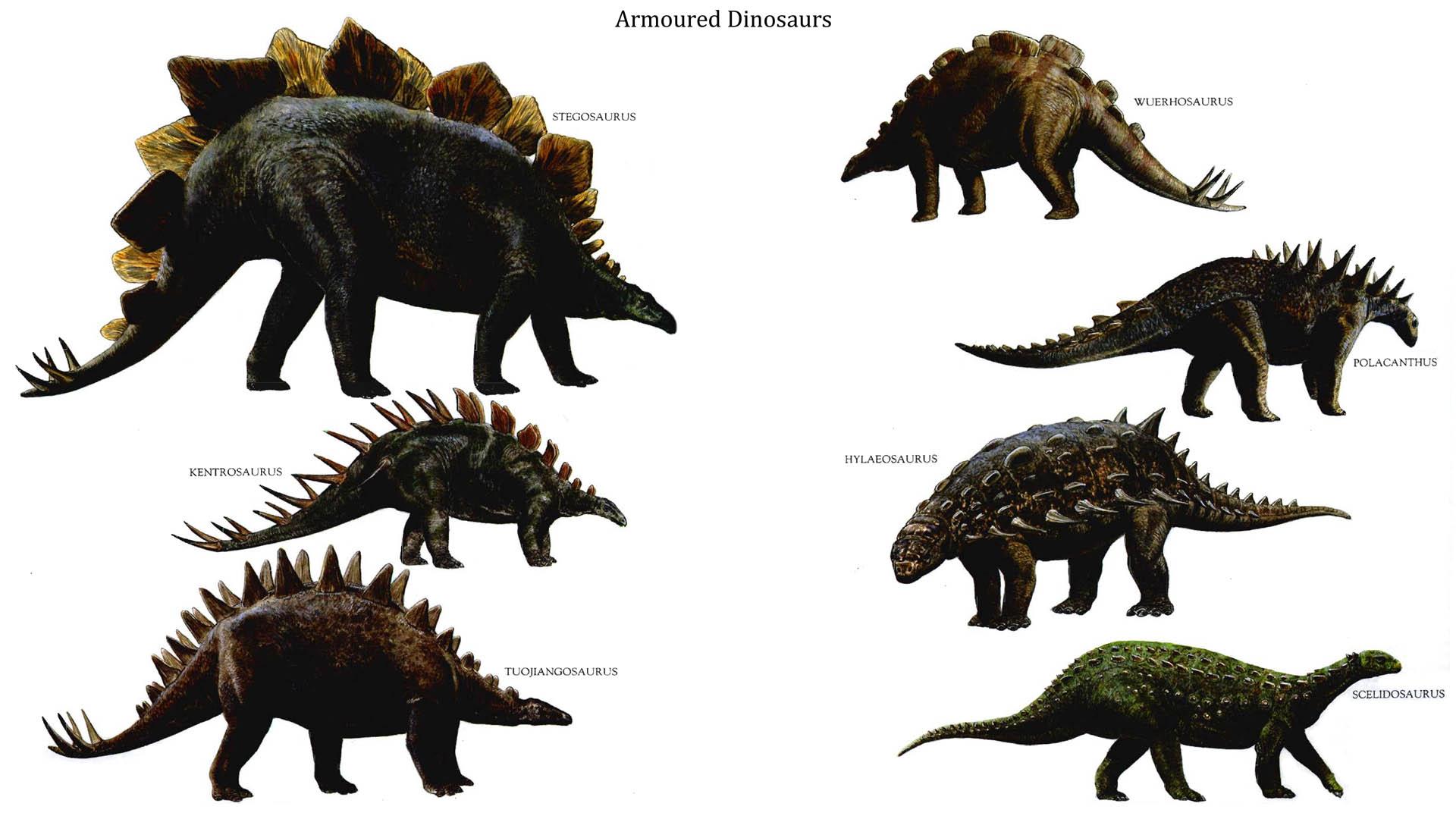 Armoured Dinosaurs   Strange Dinosaurs Wallpaper Image 1920x1080