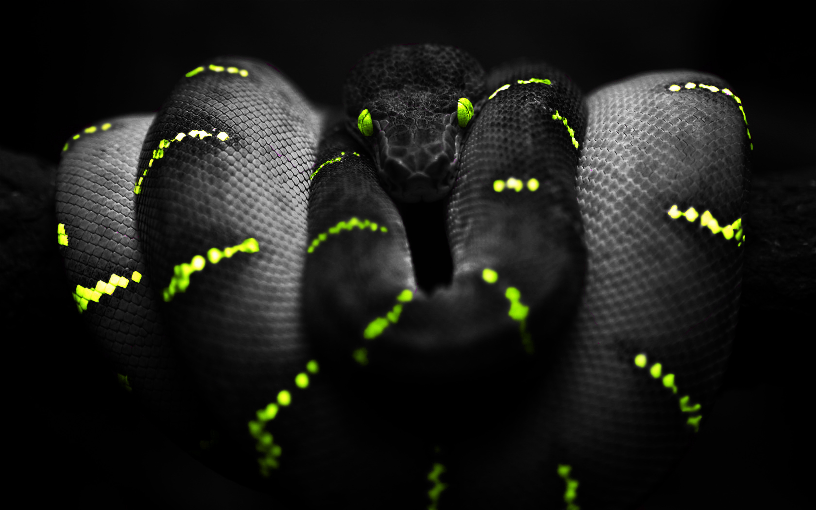 275 Snake HD Wallpapers Backgrounds 1680x1050
