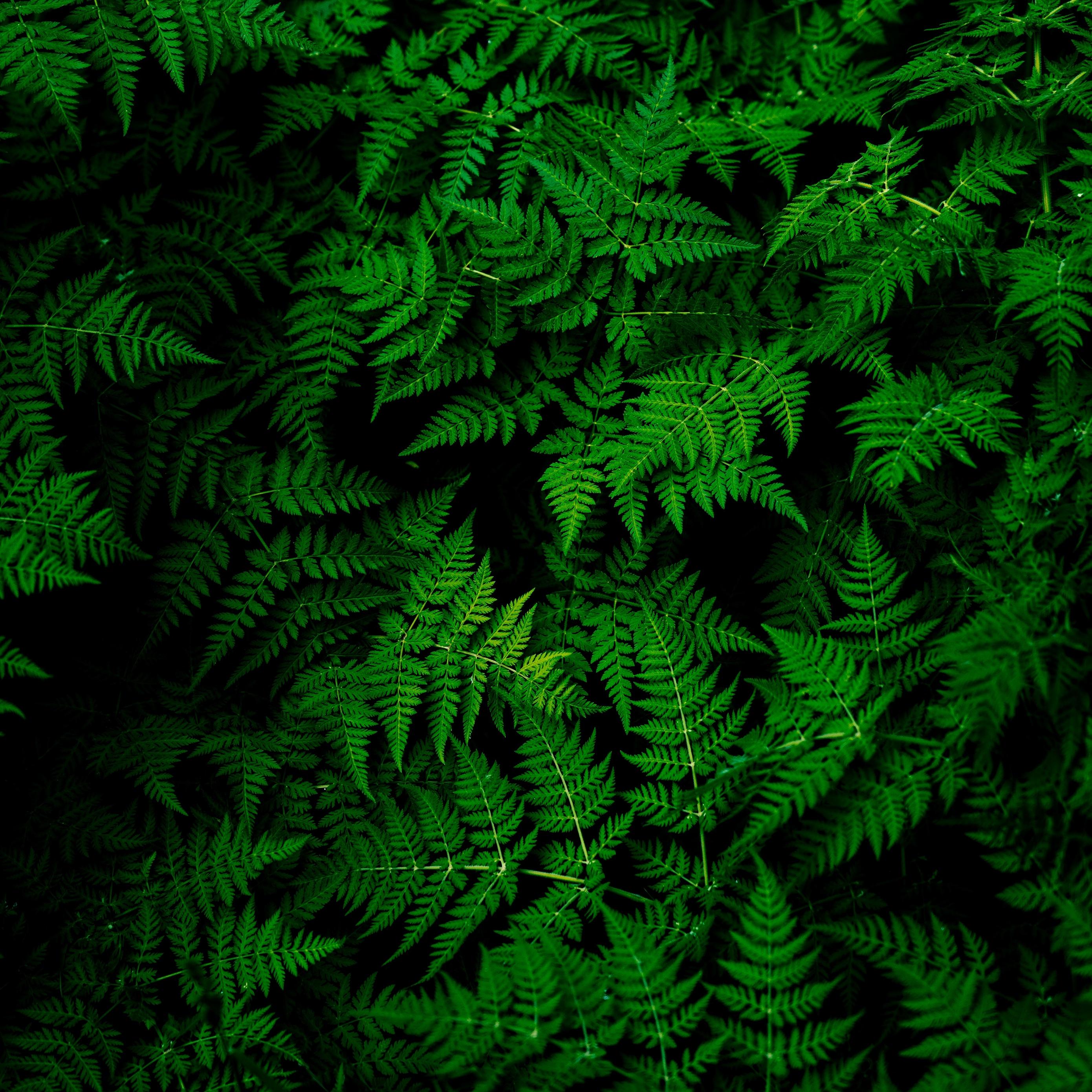 Download wallpaper 2780x2780 leaves plant green ipad air ipad 2780x2780